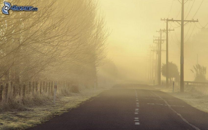 ulica, kable eletryczne, drzewa, mgła