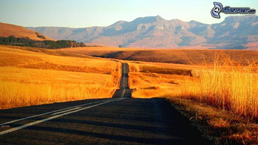 ulica, żółte pole, pasmo górskie