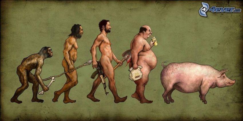 ewolucja, polownik, McDonald's, świnia