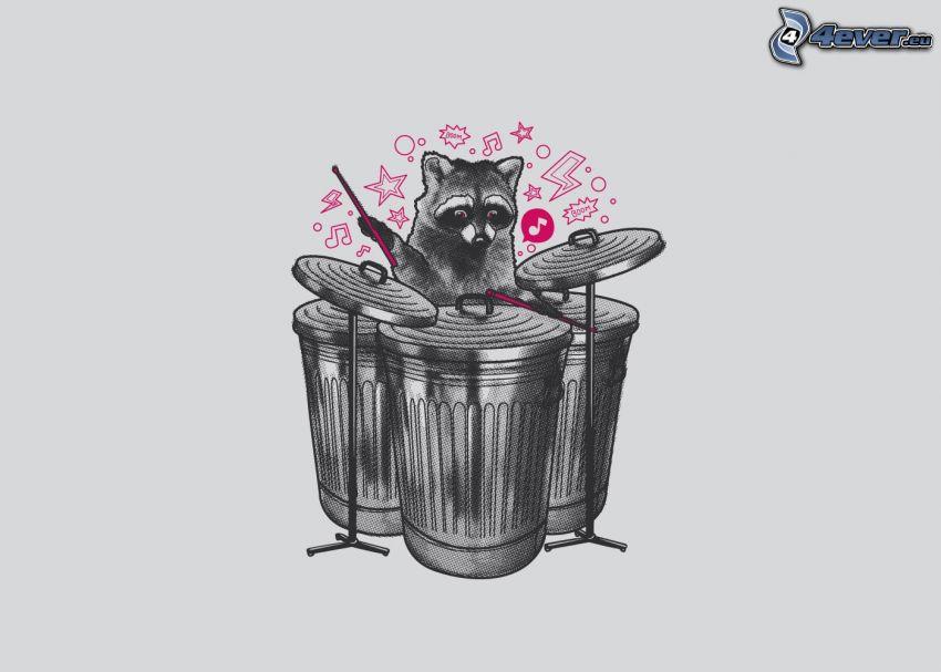 szop pracz, perkusja, kosz na śmieci
