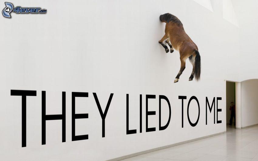 brązowy koń, ściana, text