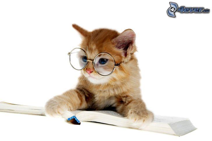 brązowy kotek, okulary, książka