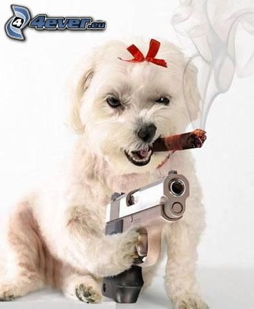 gangster, pies, pistolet, cygaro