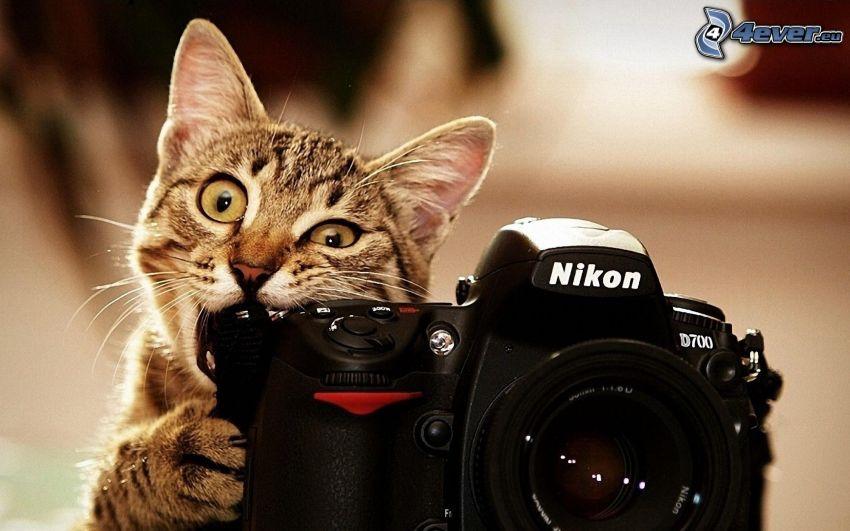 kot, aparat fotograficzny, Nikon D700