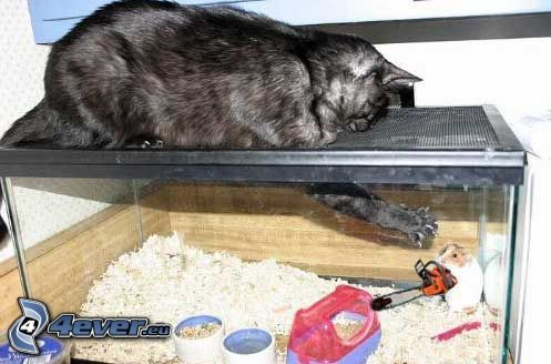 kot, chomik, piła łańcuchowa, akwarium