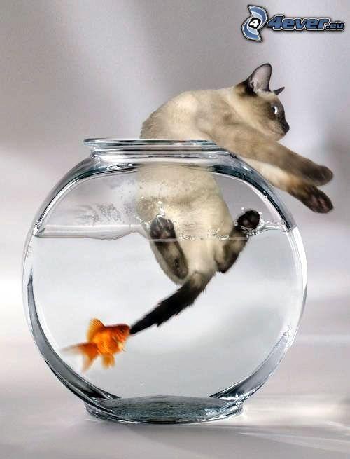 kot, ryba, śmieszne, akwarium