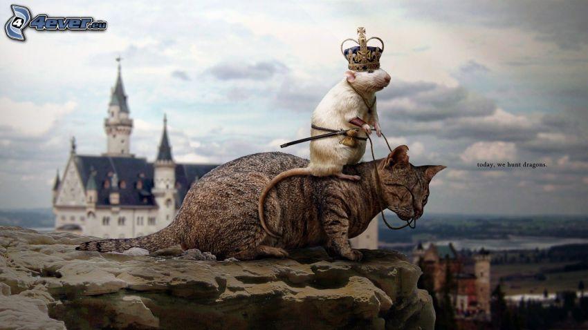 kot, szczur, korona, skała, król, zamek Neuschwanstein