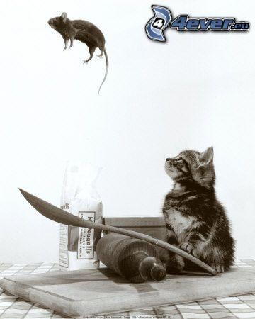 kot i mysz, skok