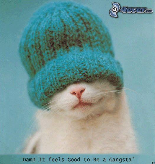kot w czapce, gangsta