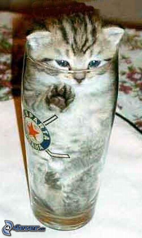 kot w szklance