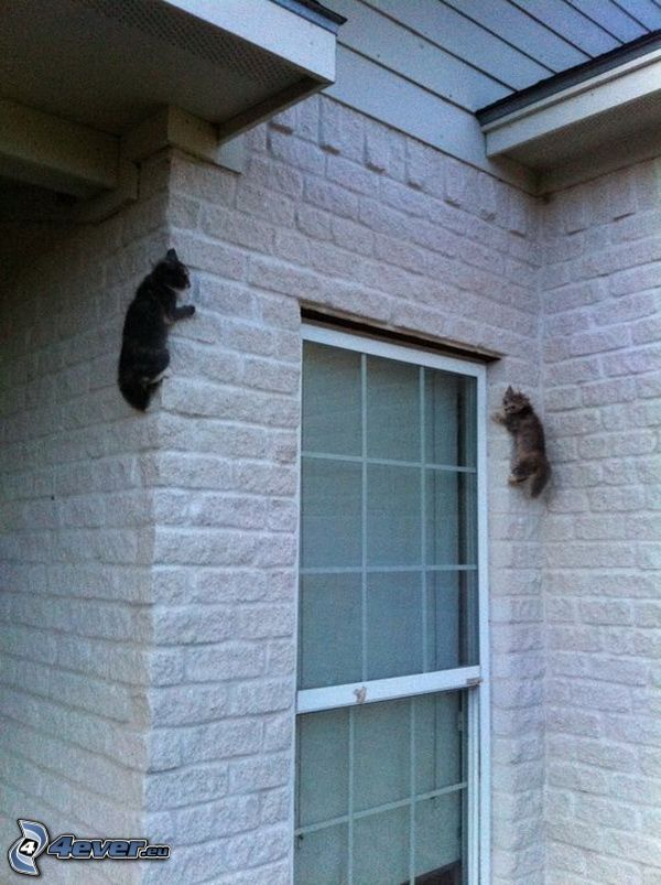 kotki, ściana