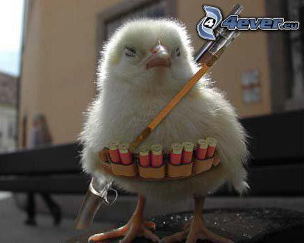 kurczak, amunicja, strzałka