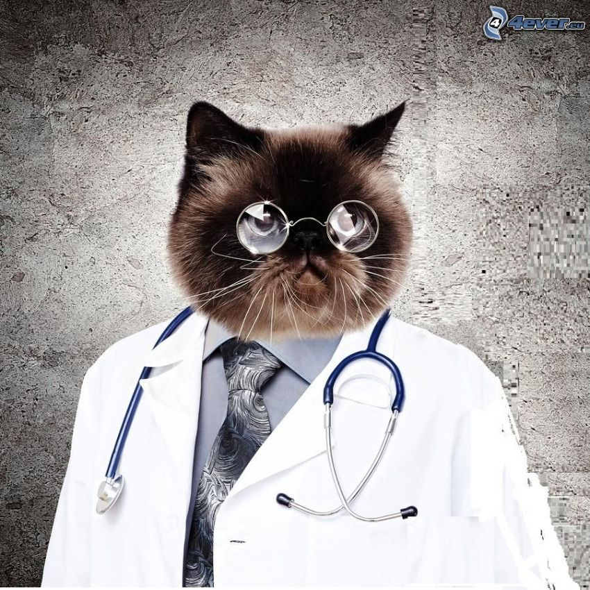 lekarz, kot