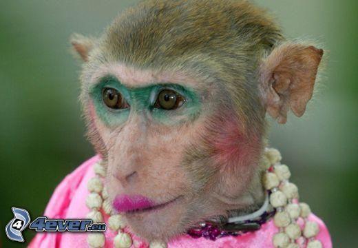małpa, modelka