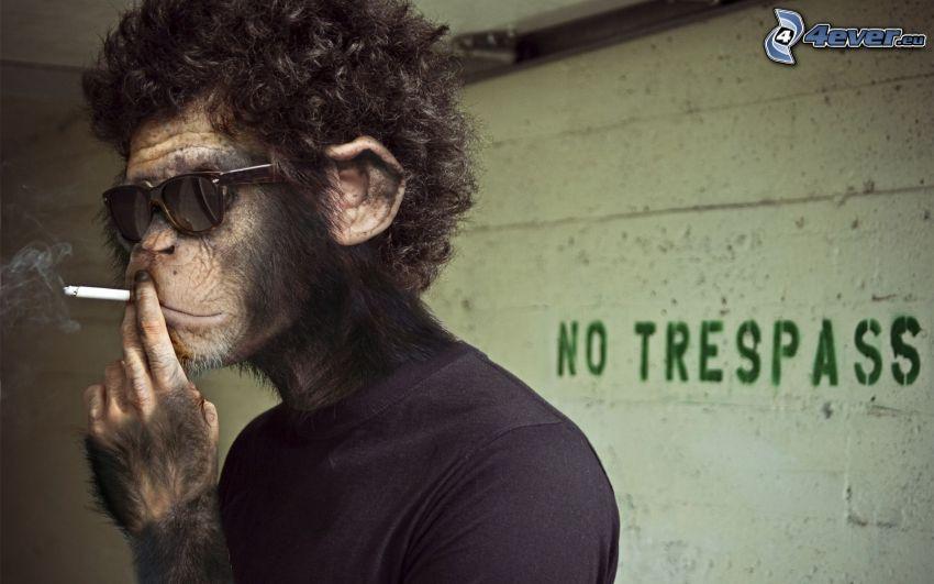 małpa, papieros