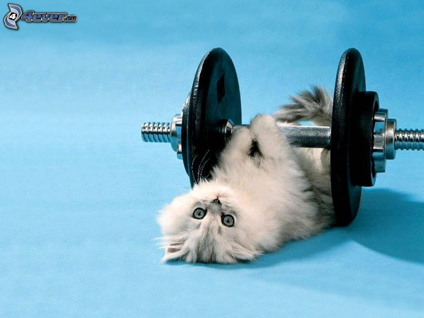 mały kotek, hantla