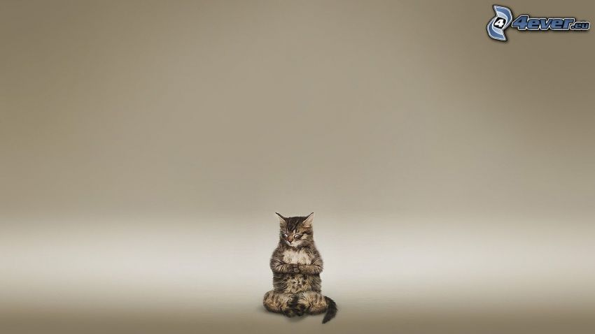 medytacja, kot