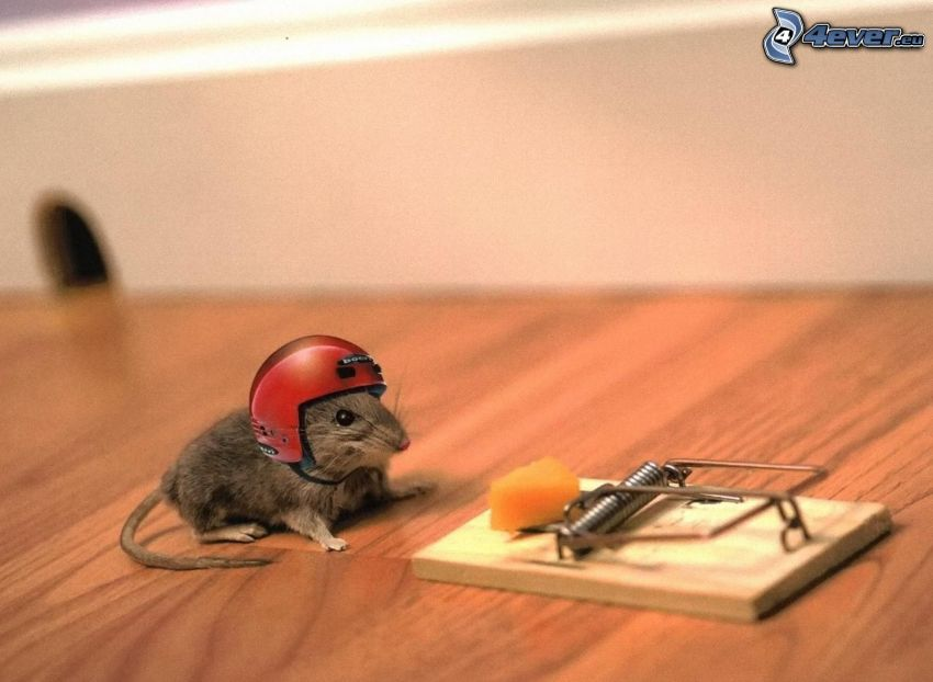 mysz, kask, pułapka, ser