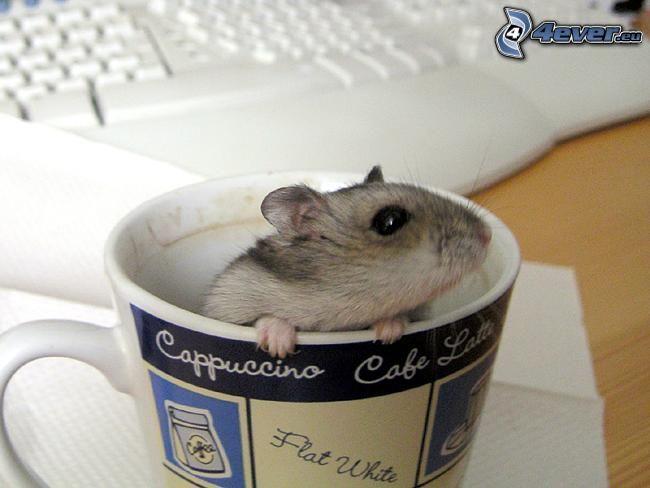 mysz, szklanka, cappuccino