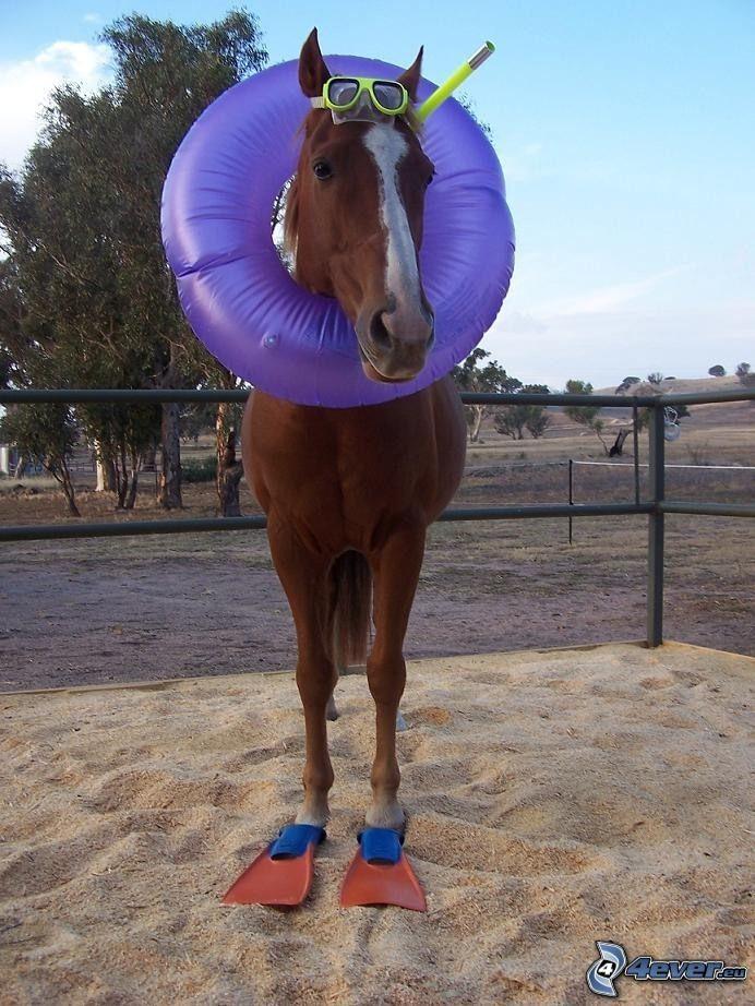 nurek, brązowy koń, piasek, maska do nurkowania, pływające koło
