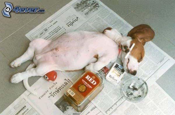 pies, alkohol, papieros, popielniczka, gazeta