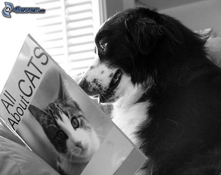 pies, książka, czarno-białe