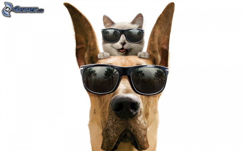 pies i kot, okulary przeciwsłoneczne