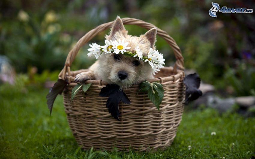 pies w koszyku, wieniec, kwiaty, trawa