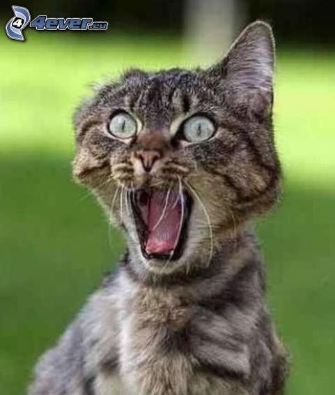 przerażony kot, strach