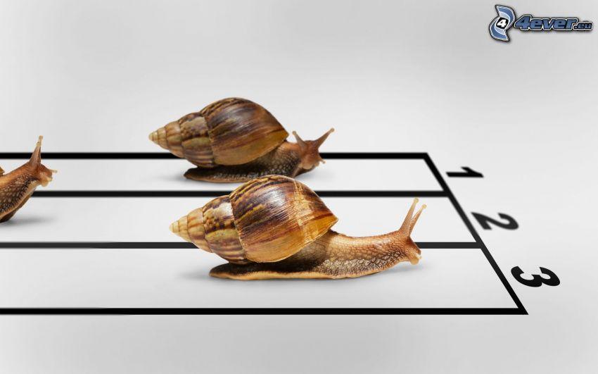 Ślimaki, wyścigi