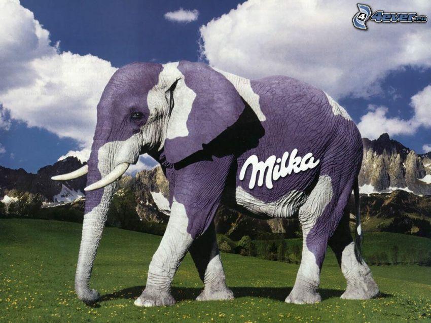 słoń, góry, trawa, Milka, reklama