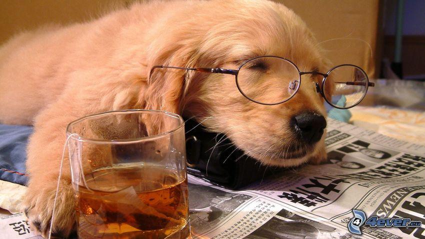 śpiący pies, herbata