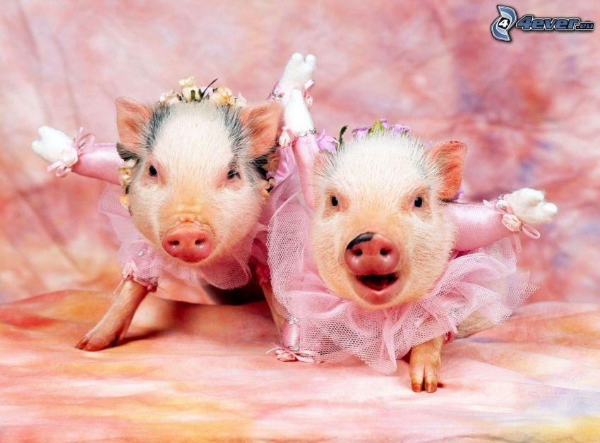 świnki, różowa sukienka
