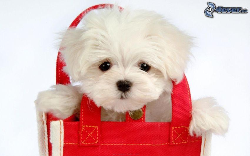 szczeniak w torbie
