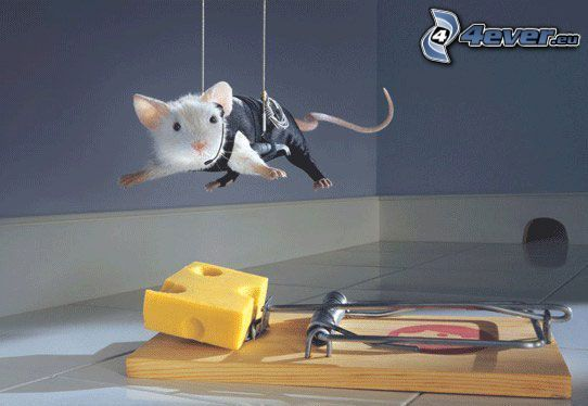 szpieg, mysz, pułapka, ser