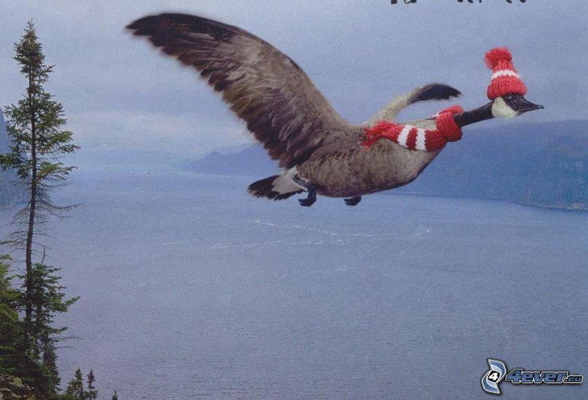ubrana kaczka, duże jezioro