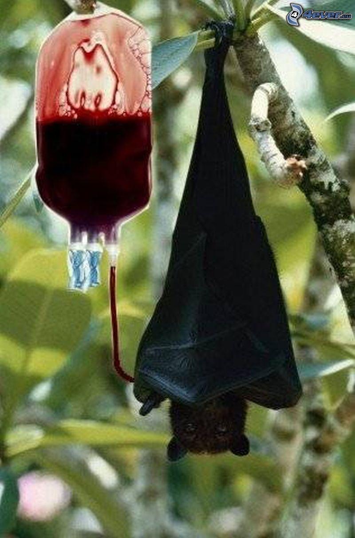 wampir, nietoperz, krew