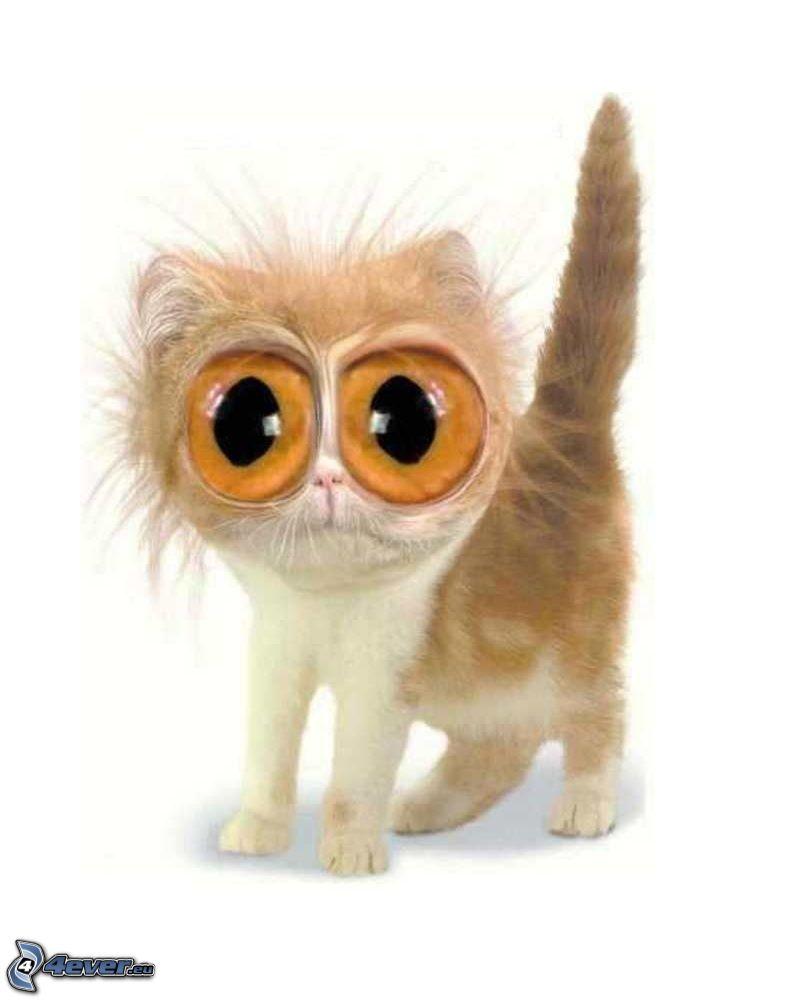 wielkie oczy, kot