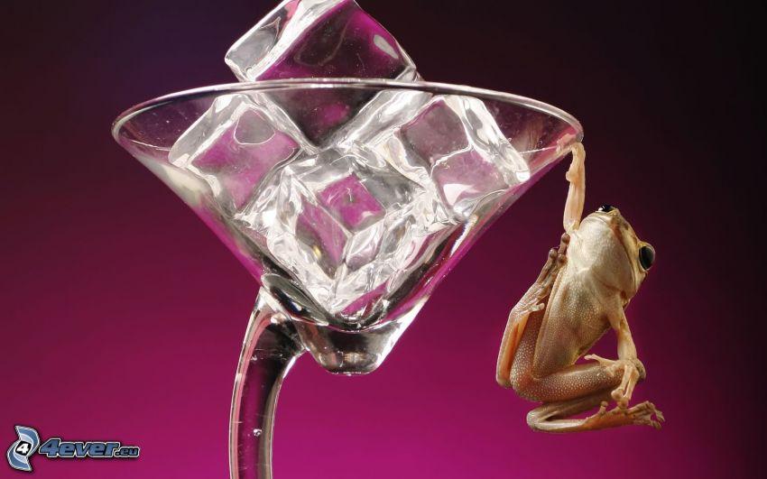 żaba, szklanka, lód