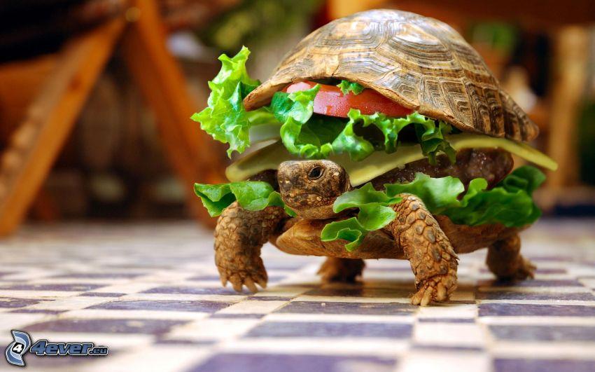 żółw, hamburger