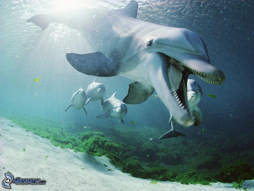 delfiny, morskie dno