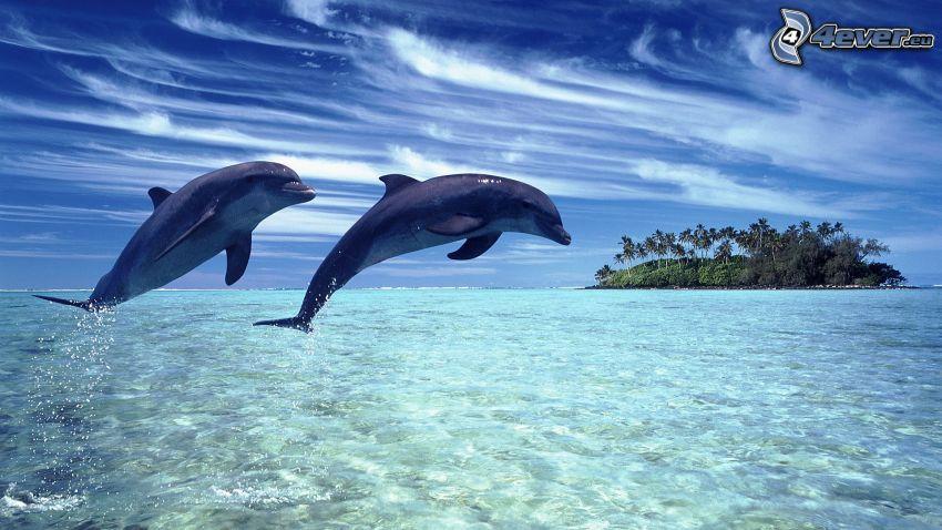delfiny, morze, wyspa