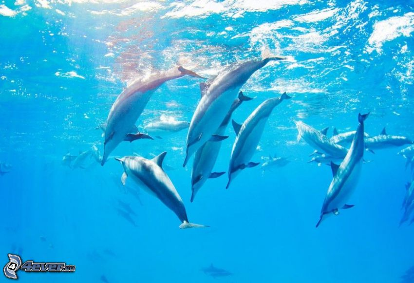delfiny, morze