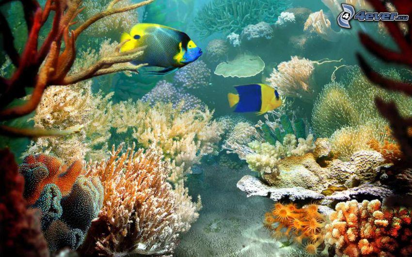 kolorowe ryby, koralowce, woda