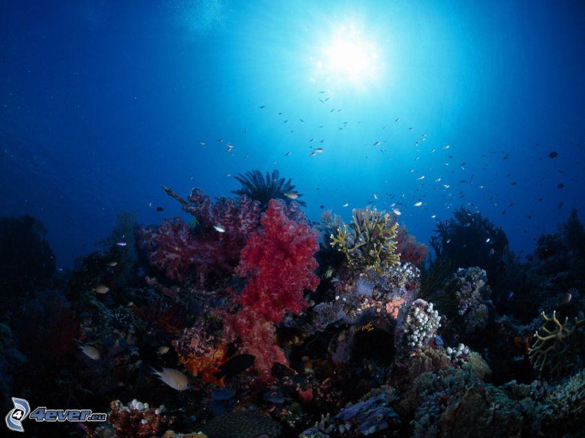 koralowce, morskie dno, rybki, woda, światło