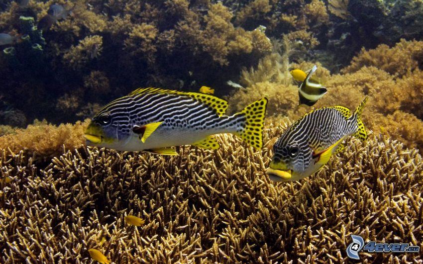 koralowe ryby, koralowce, morskie dno