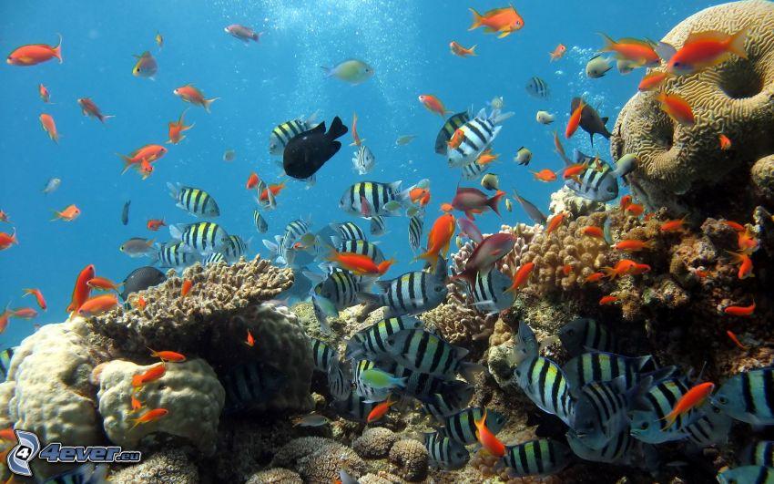 koralowe ryby, morskie dno