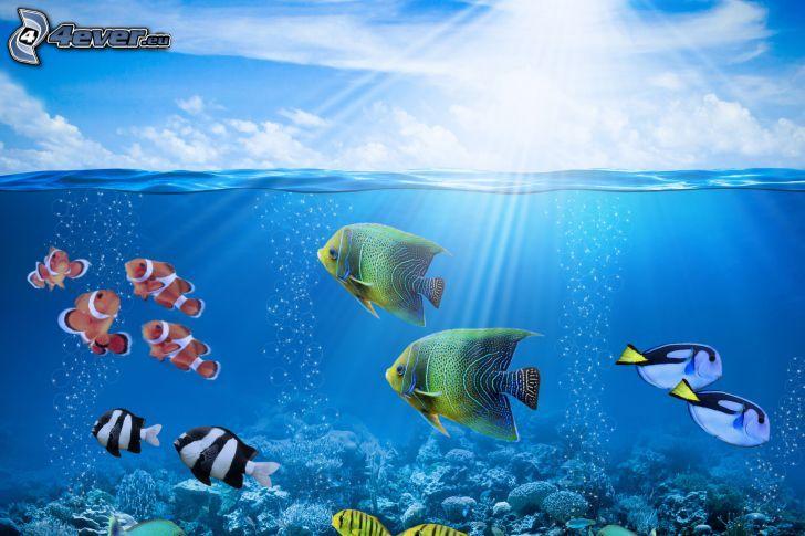 koralowe ryby, powierzchnia wody, promienie słoneczne