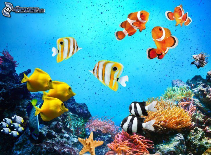 koralowe ryby, rybka klaun, żółte ryby