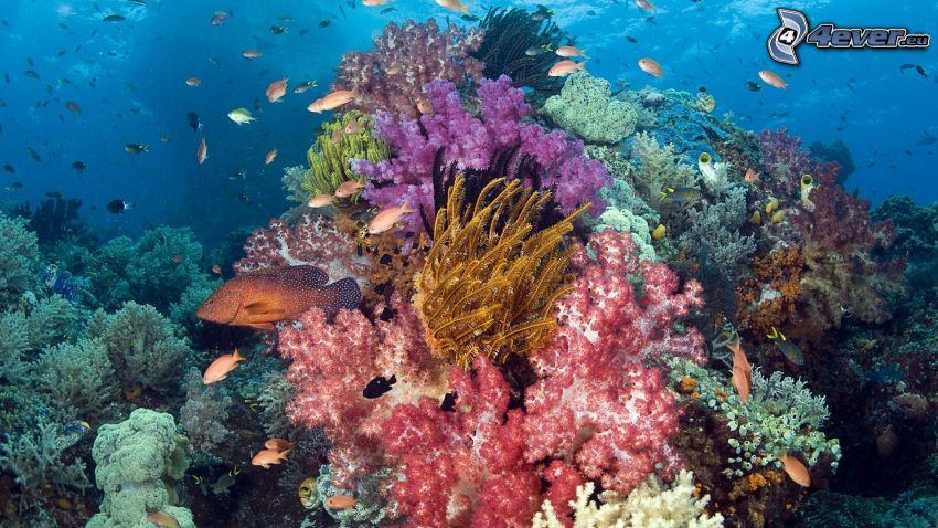 morskie dno, koralowce, koralowe ryby